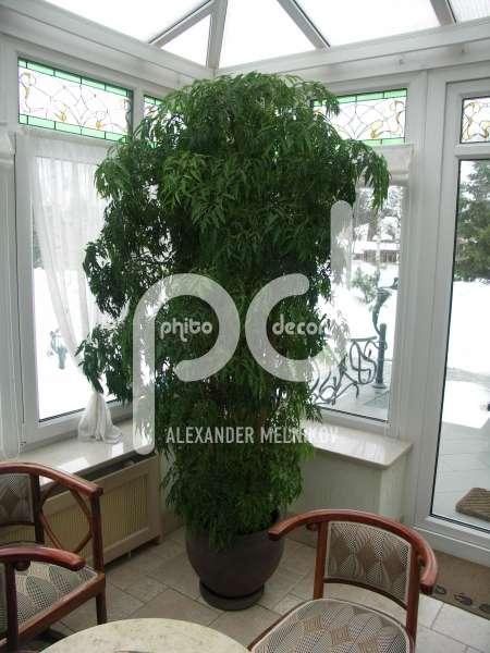 Комнатные цветы из семян как вырастить в домашних условиях